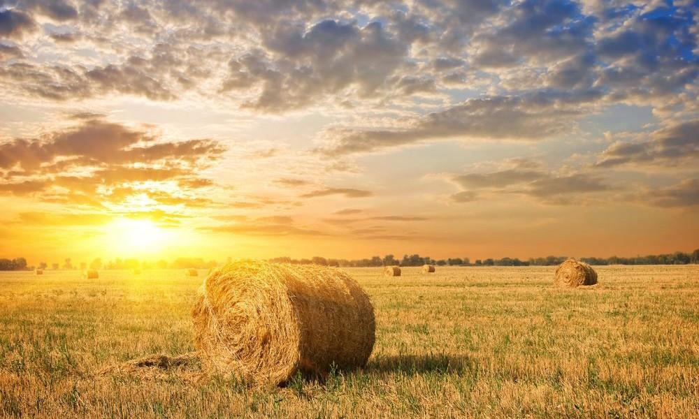 Як подарувати свій агробізнес рейдерам: лікбез